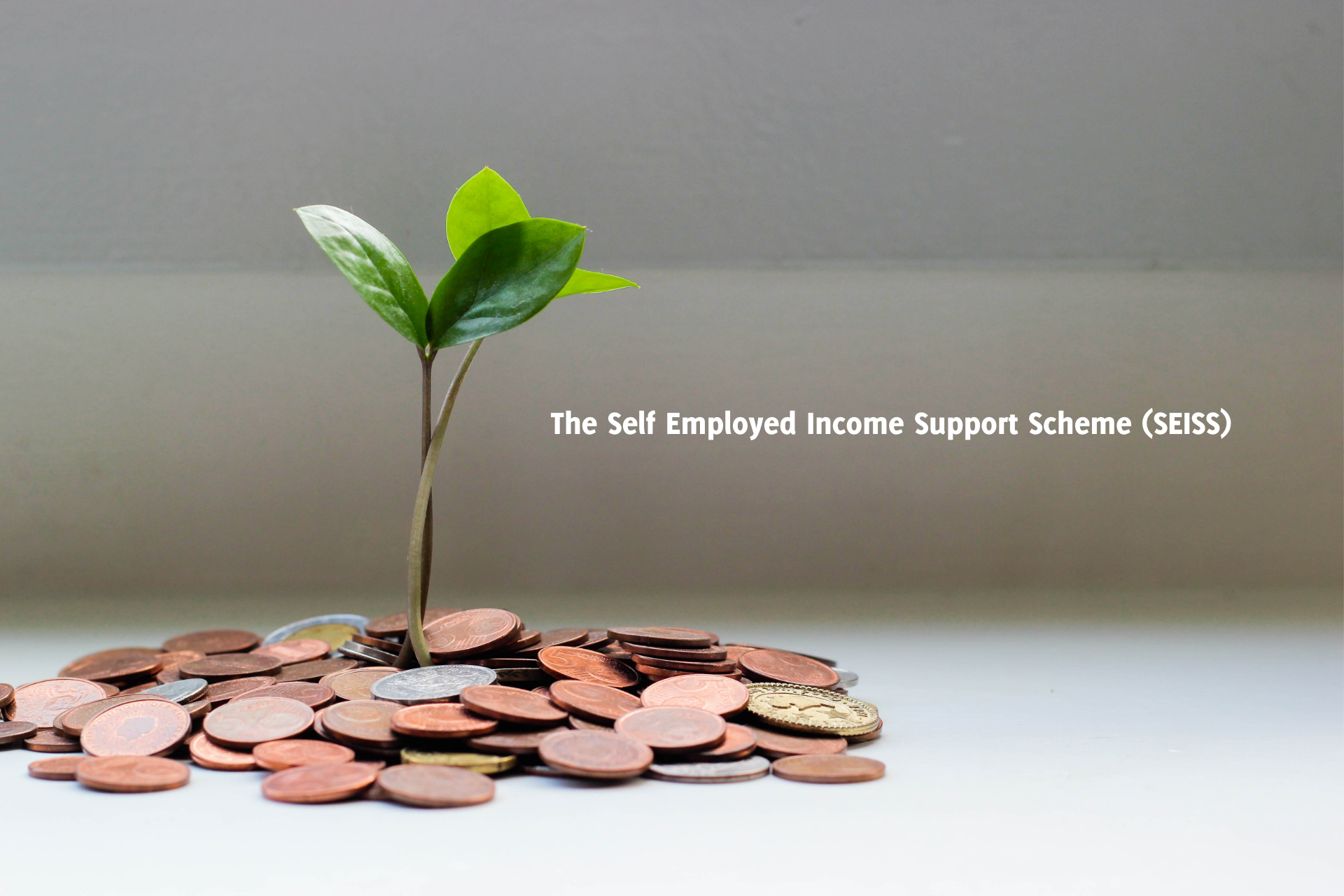 The Self Employed Income Support Scheme (SEISS)